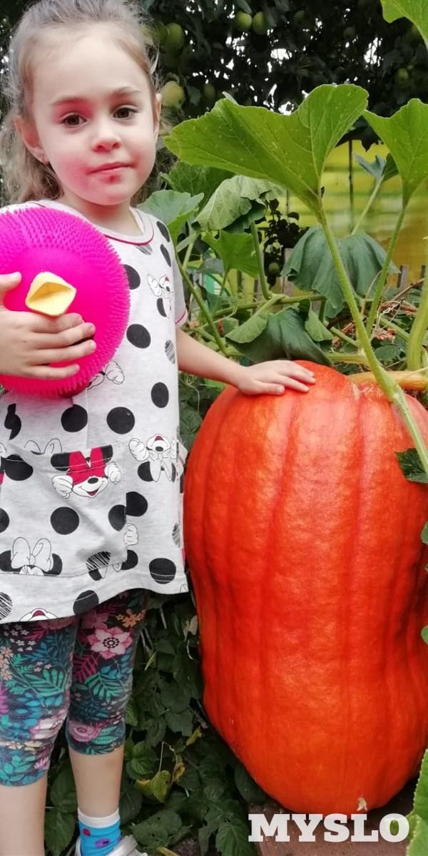 Мария Осадчая из поселка Первомайский в своем огороде вырастила огромную тыкву и сфотрографировала с этим чудо-урожаем внучку Кристину.