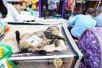 """Выставка """"Пряничные кошки"""" в ТРЦ """"Макси"""", Фото: 4"""