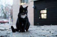 Тульские котики, Фото: 21