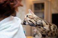 Экзотические животные в квартире, Фото: 20
