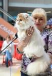 """Выставка """"Пряничные кошки"""" в ТРЦ """"Макси"""", Фото: 69"""