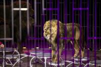 Шоу фонтанов «13 месяцев» в Тульском цирке – подарите себе и близким путевку в сказку!, Фото: 70