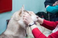 Всероссийская выставка собак 2017, Фото: 39