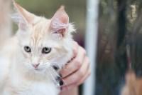Выставка кошек в МАКСИ, Фото: 29