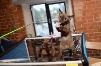 Выставка кошек в Искре, Фото: 3