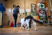 Волонтеры спасли кошек из адской квартиры, Фото: 28