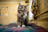 Волонтеры спасли кошек из адской квартиры, Фото: 76