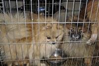 Похищенные собаки, Фото: 31
