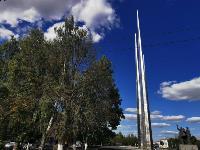 В Туле гибнут деревья, Фото: 51