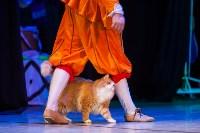 Театр кошек в ГКЗ, Фото: 53