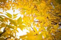 Золотая осень в Тульской области, Фото: 48