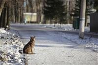 Центральный парк культуры и отдыха им. Белоусова. Декабрь 2013, Фото: 4