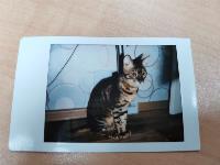 Магия в каждом фото. Обзор культовой камеры Instax mini в новом исполнении, Фото: 5