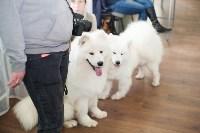 Выставка собак в Туле, 29.11.2015, Фото: 98
