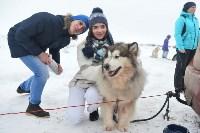 Праздник северных собак на Куликовом поле , Фото: 60