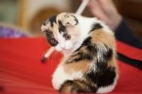 Международная выставка кошек. 16-17 апреля 2016 года, Фото: 15