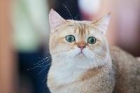 Международная выставка кошек. 16-17 апреля 2016 года, Фото: 117