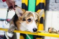 Выставка собак в Туле, Фото: 27