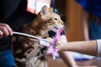 Международная выставка кошек. 16-17 апреля 2016 года, Фото: 53