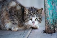 Тульские котики, Фото: 48