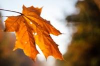 Центральный парк, утро, осень, Фото: 50
