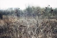 Весна 2020 в Туле: трели птиц и первые цветы, Фото: 5