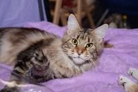 Выставка кошек в Искре, Фото: 18