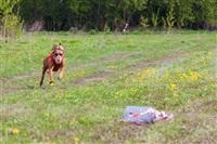 В Туле состоялись собачьи бега, Фото: 30