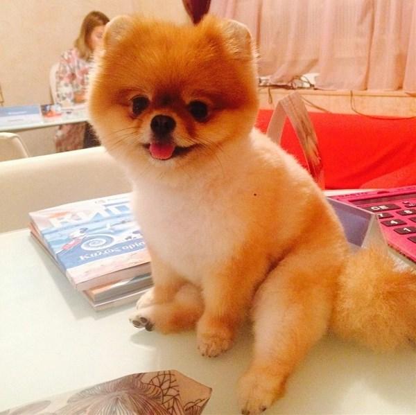 Самая мимимилейшая чудо-собака на свете по имени Кики =)