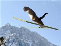 Олимпийские котики, Фото: 2