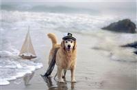 Самая счастливая собака в мире!, Фото: 3