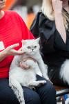 Выставка кошек в МАКСИ, Фото: 38