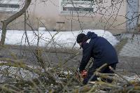 Кронирование деревьев в Туле: что можно, а чего нельзя?, Фото: 9