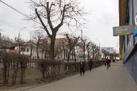 Кронированные деревья на ул.Октябрьской. 7.04.2015, Фото: 1