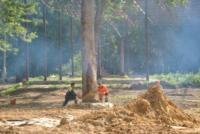 В Туле проводят работы по благоустройству зон отдыха. 26 июля 2014 год, Фото: 12