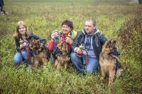 Международная выставка собак, Барсучок. 5.09.2015, Фото: 33