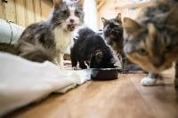 Волонтеры спасли кошек из адской квартиры, Фото: 63
