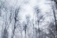 Темная сторона Платоновского парка, Фото: 16