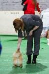 Выставка собак в Туле 14.04.19, Фото: 47
