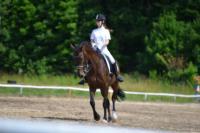 В Ясной поляне стартовал турнир по конному спорту, Фото: 88