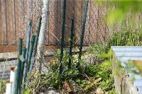 Бродячие собаки погубили рассаду тулячки и довели ее до сердечного приступа, Фото: 5