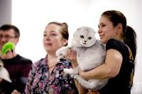 Выставка кошек. 4 и 5 апреля 2015 года в ГКЗ., Фото: 65