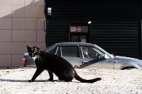 Тульские котики, Фото: 78