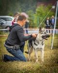 Международная выставка собак, Барсучок. 5.09.2015, Фото: 16