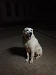 Пропала собака, Фото: 1