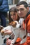 Выставка собак в Туле 26.01, Фото: 39