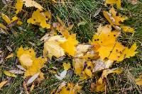 Золотая осень в Туле-2019, Фото: 12