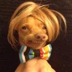 Самая фотогеничная собака, Фото: 3