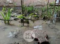 Дворы на Красноармейском проспекте затопило нечистотами, Фото: 19