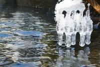 Незамерзающая река Пехорка, Подмосковье. Фото Татьяны Афанасьевой., Фото: 20
